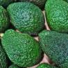 Avocado siciliani bio 3 frutti