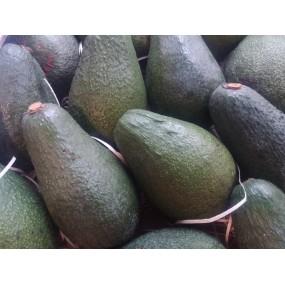 Avocado siciliano 1 frutto