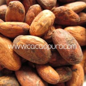 Semi Interi di Cacao Crudo