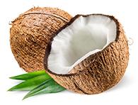 Cocco Bio